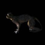 fds-ornithologie-02