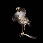 fds-ornithologie-04