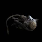 fds-ornithologie-06
