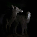 fds-ornithologie-07