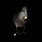 fds-ornithologie-13