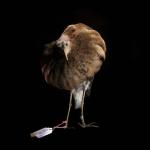 fds-ornithologie-15