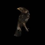 fds-ornithologie-20