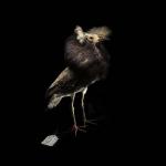 fds-ornithologie-21