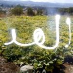 palestineprojection14